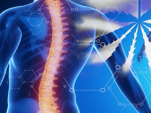 Восстановление мезенхимальными стволовыми клетками пациентов после травм спинного мозга